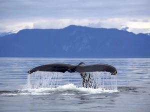 90 человек пострадали при столкновении парома с китом