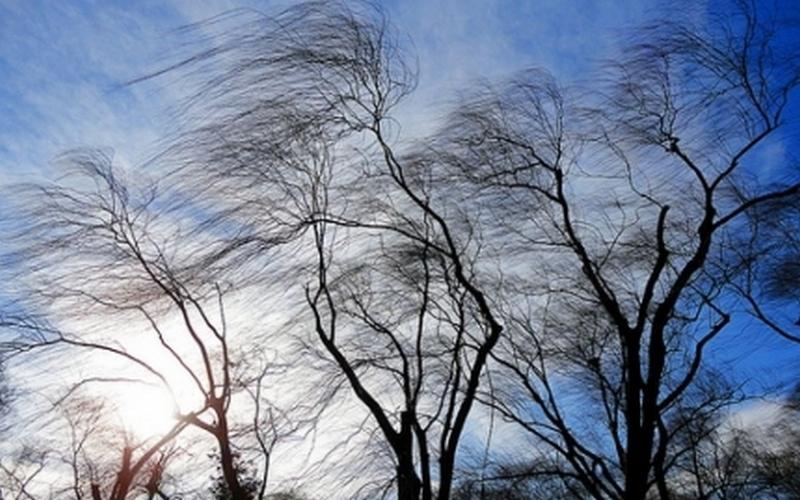 Брянцев предупредили о возможных падениях деревьев и рекламных щитов