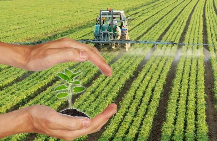 Почвенные гербициды – максимально эффективная защита огорода