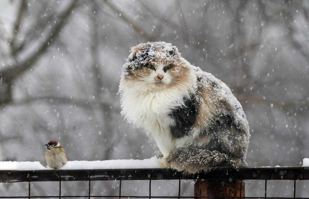 29 марта в Брянске будет снег с дождем