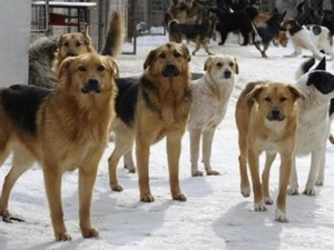 В Златоусте бездомная собака укусила девочку за лицо