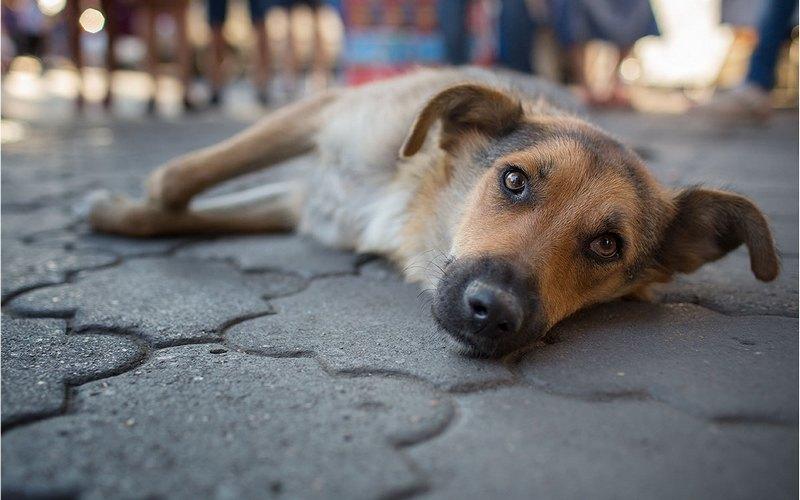 В Новозыбкове таксист покалечил лежащую на тротуаре собаку