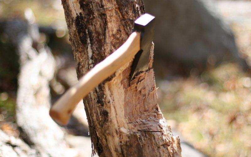 Спиливший 19 деревьев брянец не смог обмануть полицейских