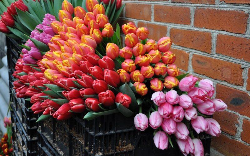 Брянцам рассказали, где купить цветы к 8 марта