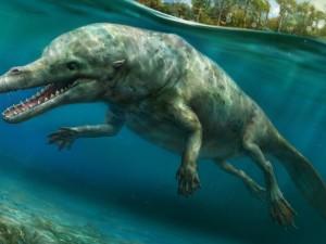 Четвероногие киты жили и в море и на суше