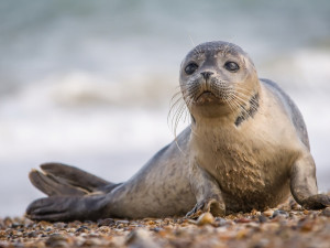 «Тюлени — это не колбаса!»: Аморальное производство на Магадане требуют закрыть зоозащитники