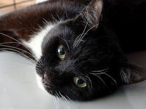 Видео спасения кота Стёпы пожарными Спасска набирает популярность в Сети