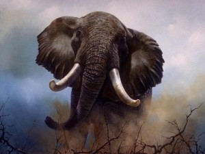Слон заступился за носорога и убил браконьера. Львы доели