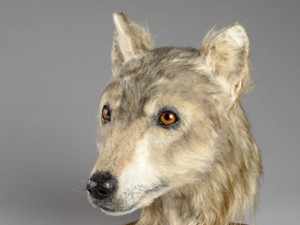Облик древней собаки восстановили в Шотландии