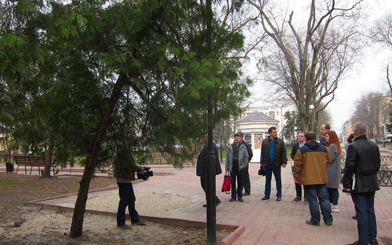 В Брянске в сквере им. Карла Маркса спилят девять опасных деревьев