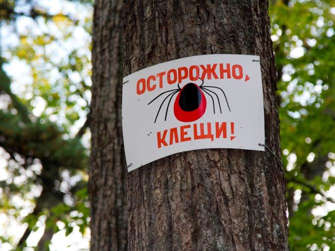 В Брянской области трое детей пострадали от укусов клещей