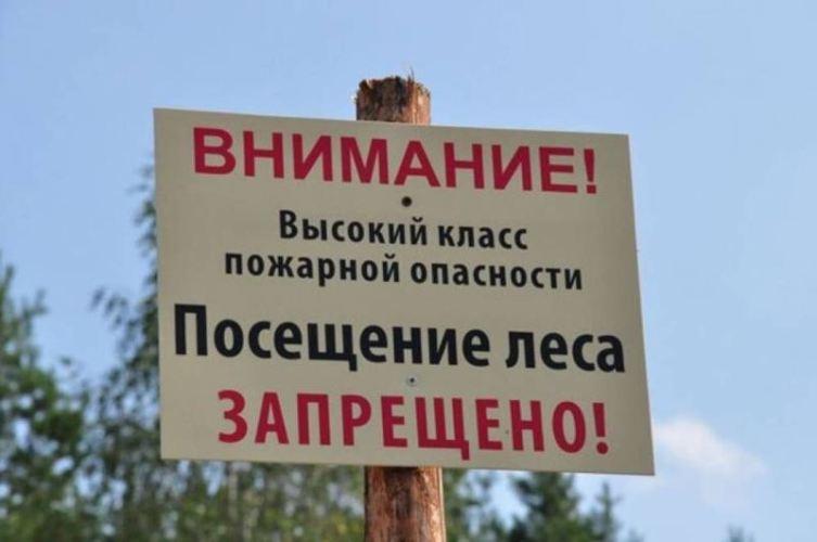 На майские праздники брянцам запретят походы в лес