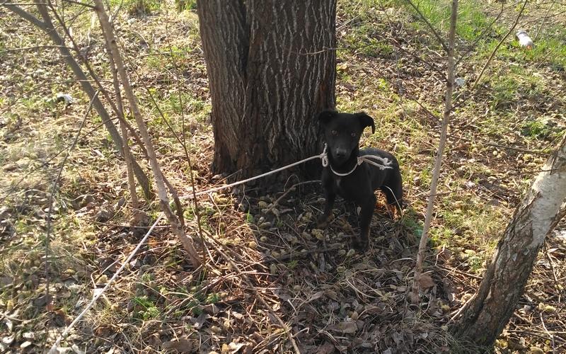 В Новозыбковском районе живодеры приговорили щенка к голодной смерти