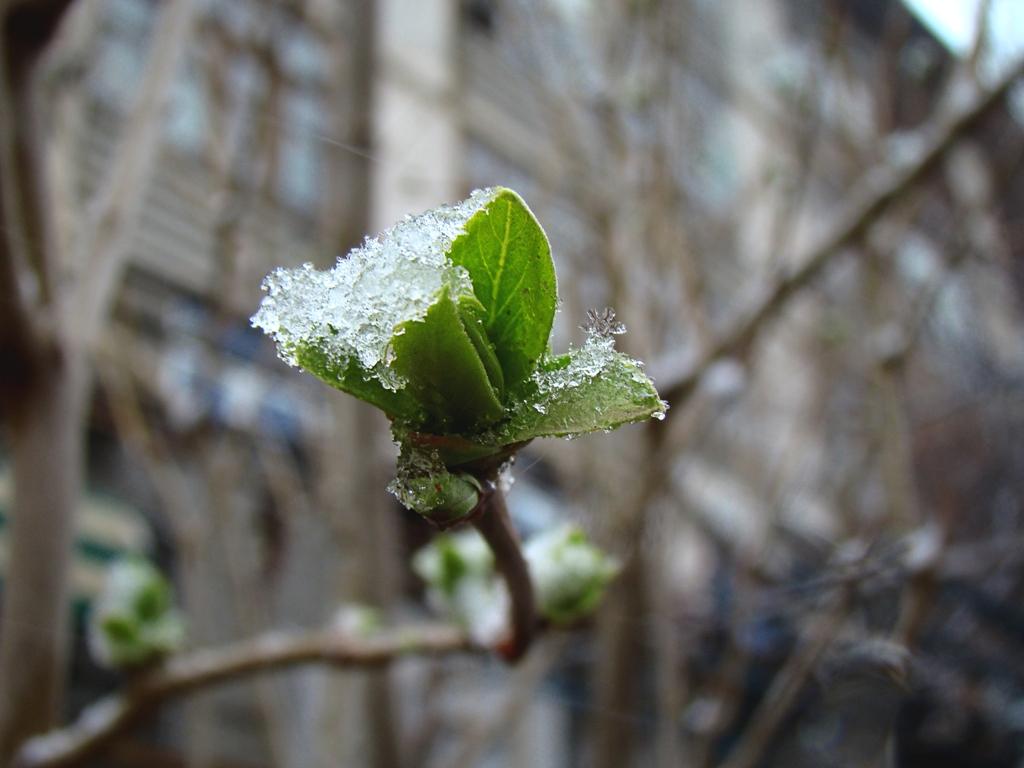 В Гидрометцентре призвали не спешить убирать зимние вещи