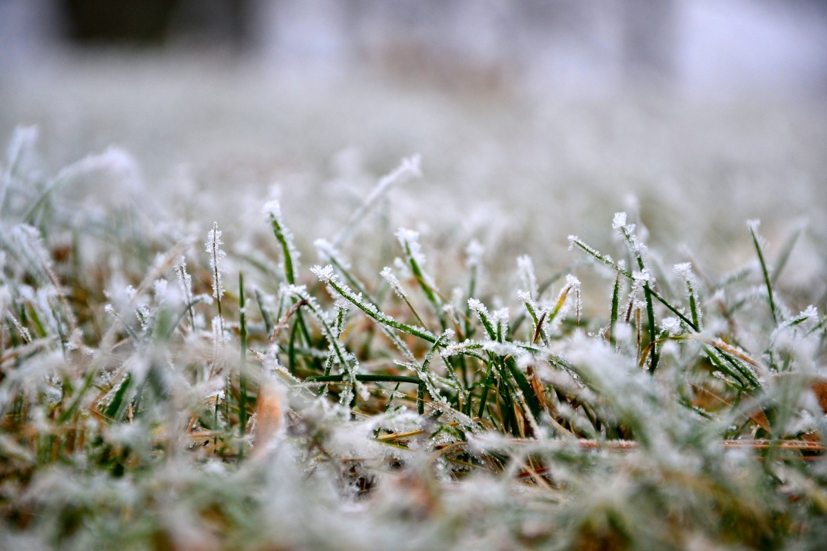 1 мая в Брянскую область придут морозы