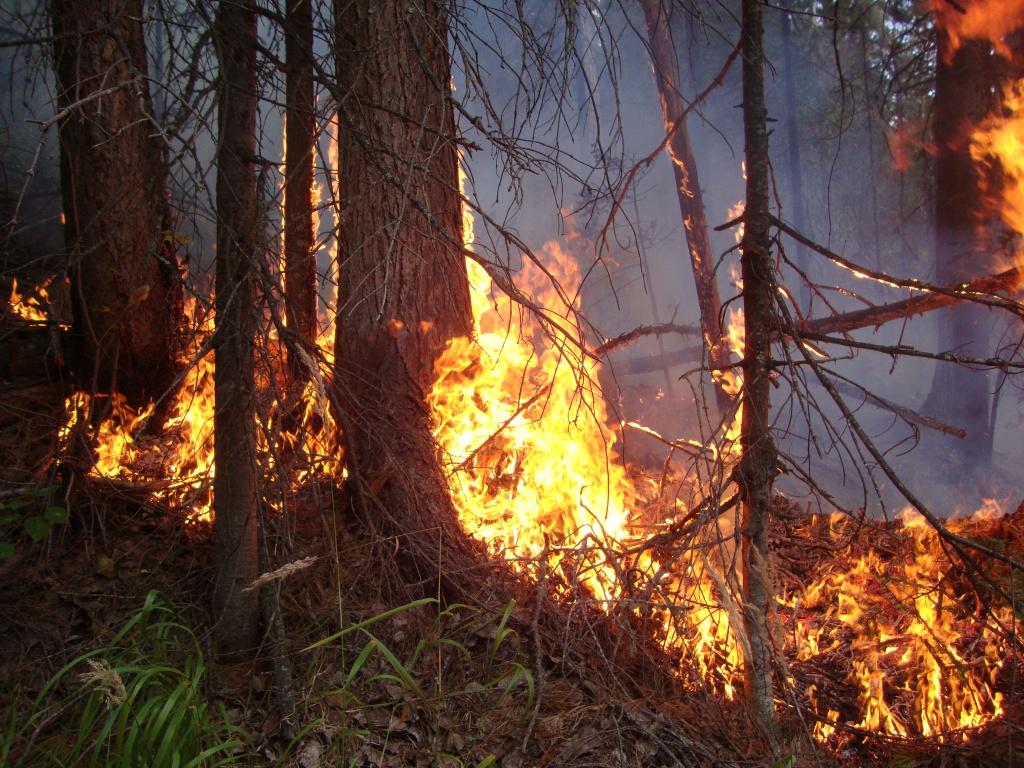 На Первомай в Карачевском районе горел лес
