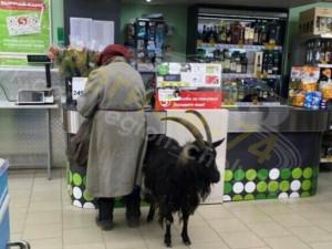 С собаками в магазин нельзя, а с козлом можно?