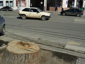 Более 500 деревьев хотят срубить в центре Челябинска