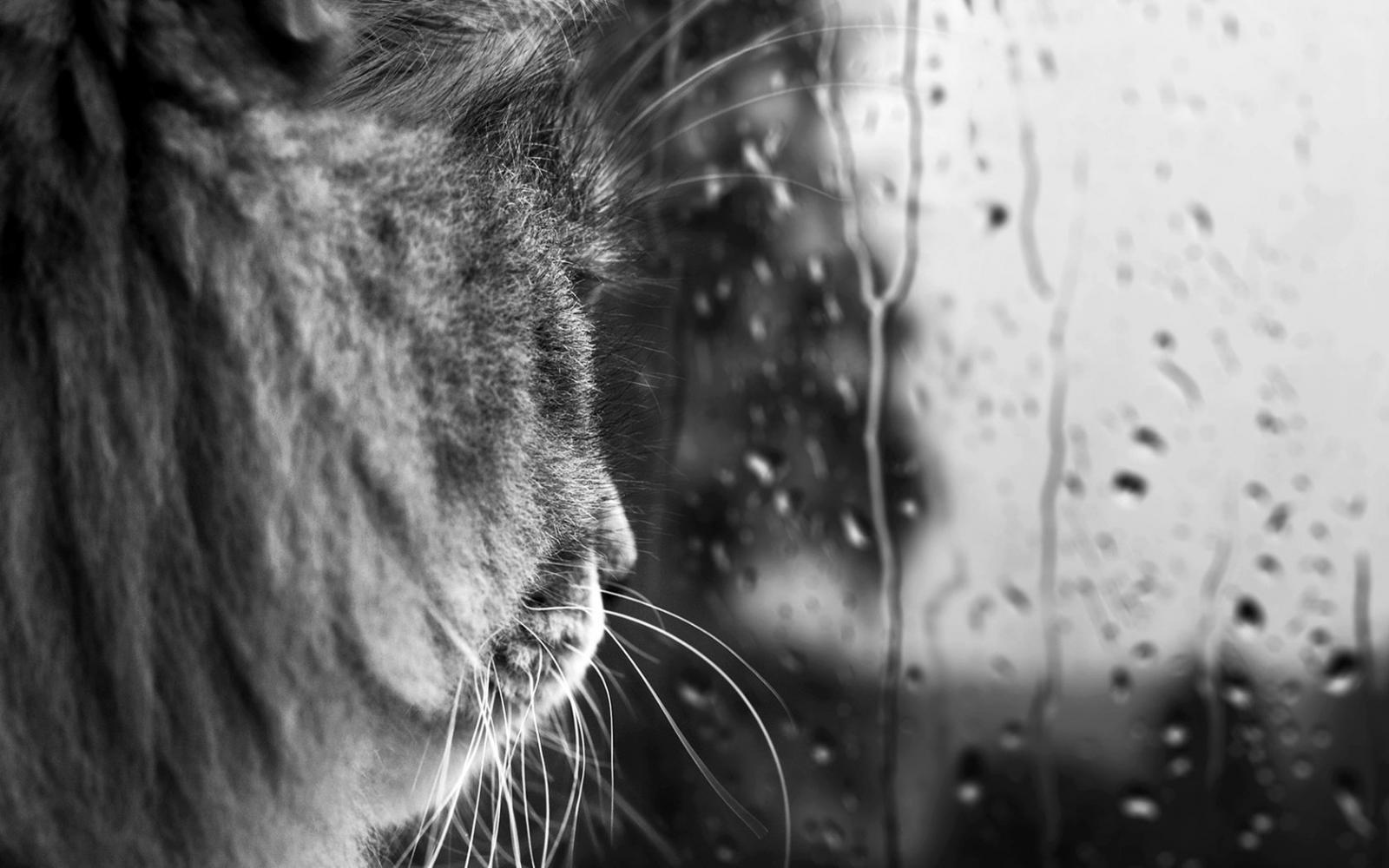 Завтра в Брянске целый день будет идти дождь