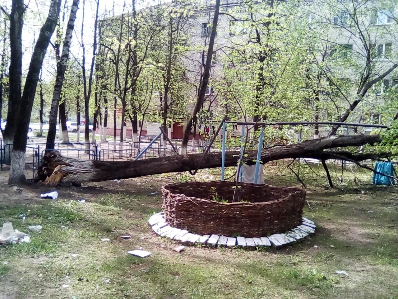 В Брянске во дворе дома по улице Почтовой рухнуло дерево