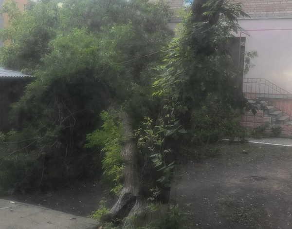 В Брянске на Грибоедова рухнуло дерево