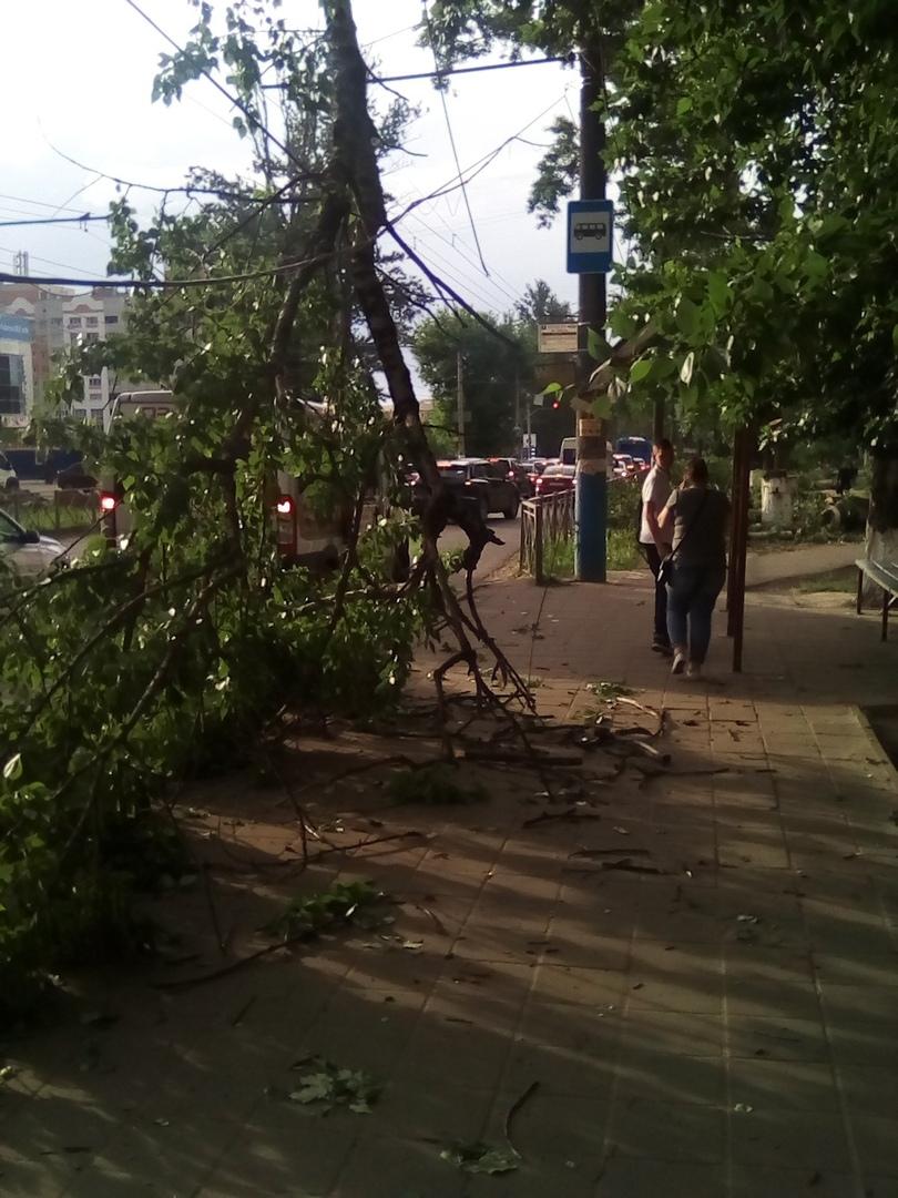В Брянске на переулке Пилотов рухнула ветка тополя