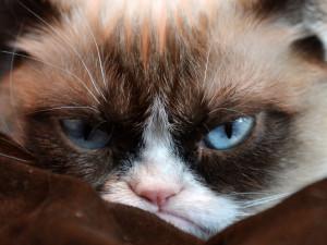 Самая известная «сердитая кошка» планеты умерла (видео)