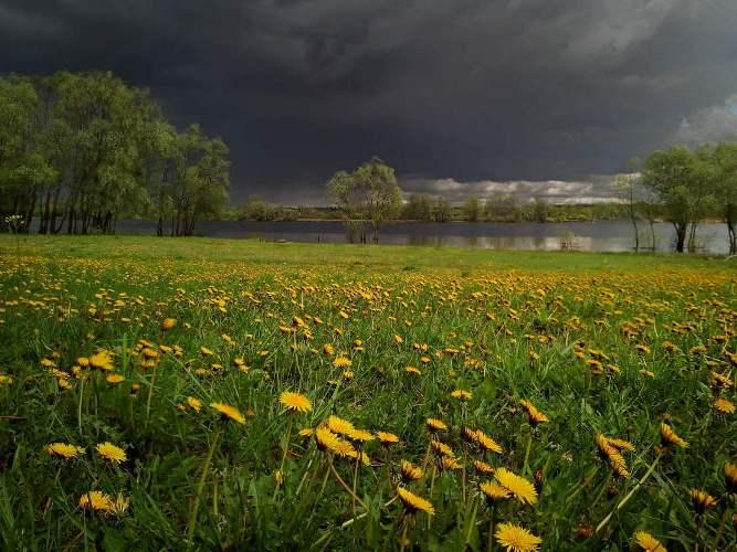 Ночью на Брянск обрушится сильный дождь с грозой