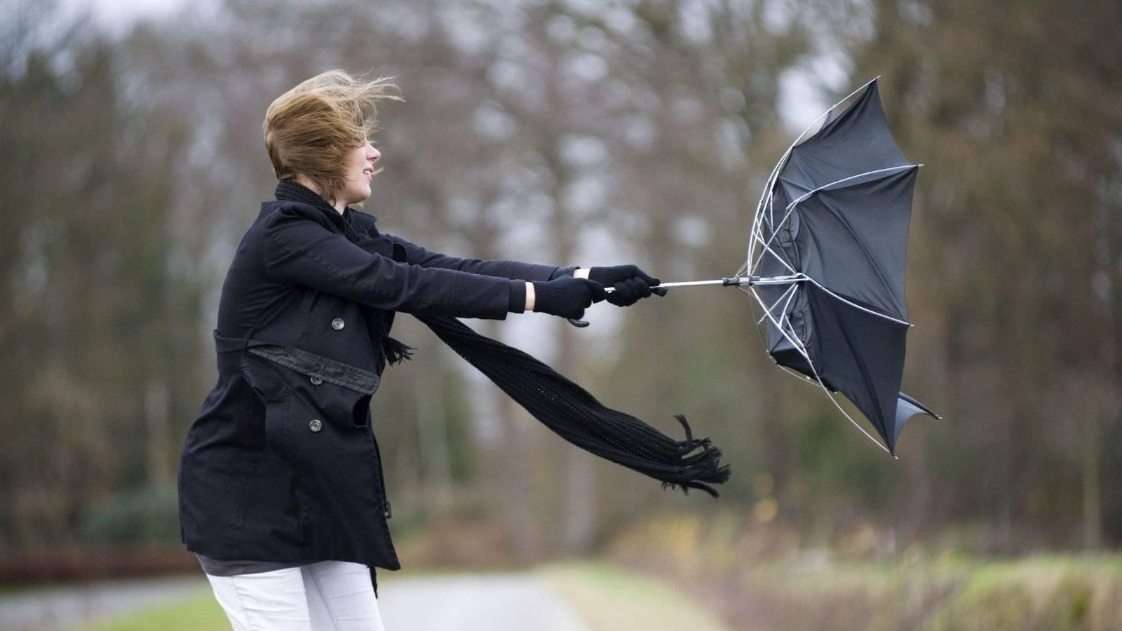 На Брянщине из-за сильного ветра объявлен «желтый» уровень опасности