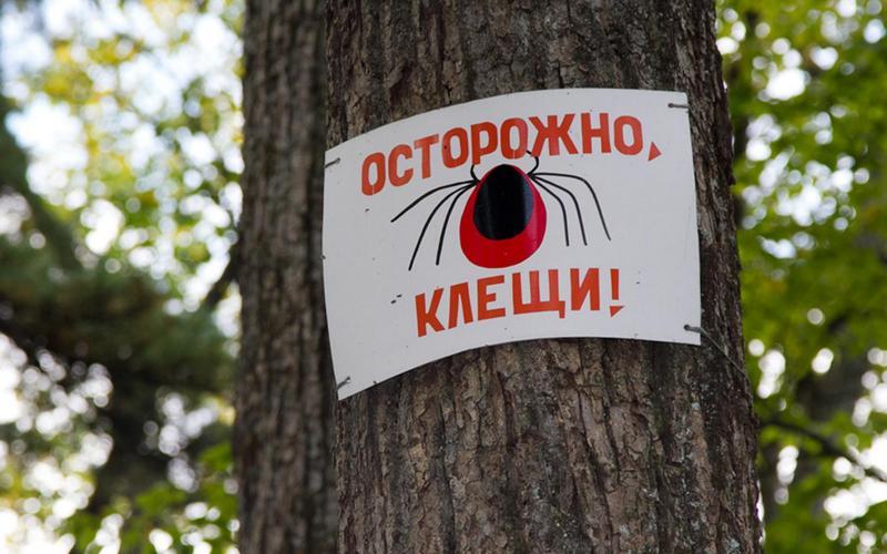 В Брянске кровожадные клещи напали на 78 детей