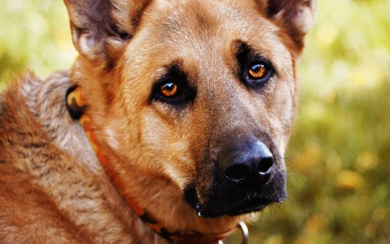В Новозыбкове водитель задавил собаку на глазах ее маленького хозяина