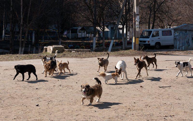 В Почепе на ребенка набросилась стая агрессивных собак