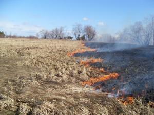Чиновники предложили изымать земли за мусор и нескошенную траву