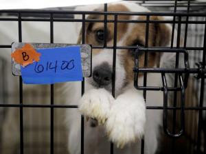 Почти 200 собак спасли из заброшенного заводчиком питомника
