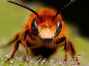 «Живую посылку» с пчелами доставила Почта России в Челябинск из Майкопа