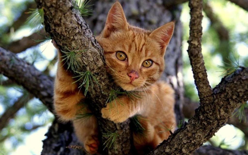 Шальное спасение кота выложили брянцы всоциальной сети