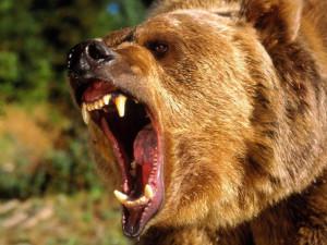 Тувинец откусил язык напавшему медведю