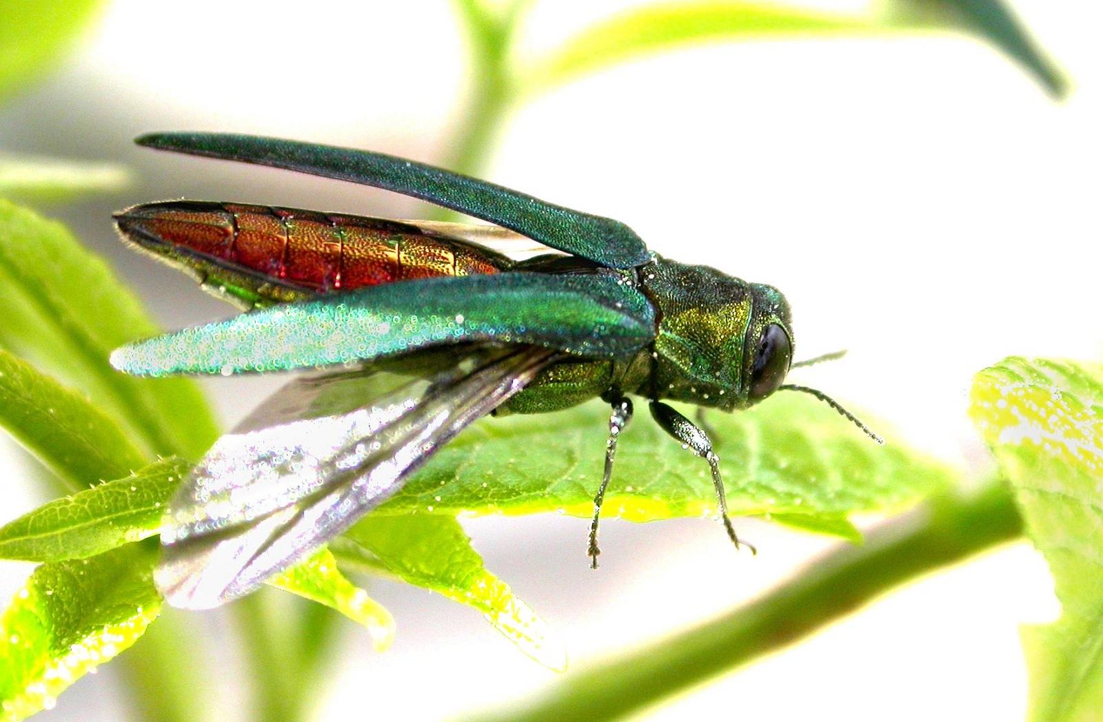 В Брянской области из-за опасного насекомого введен карантин