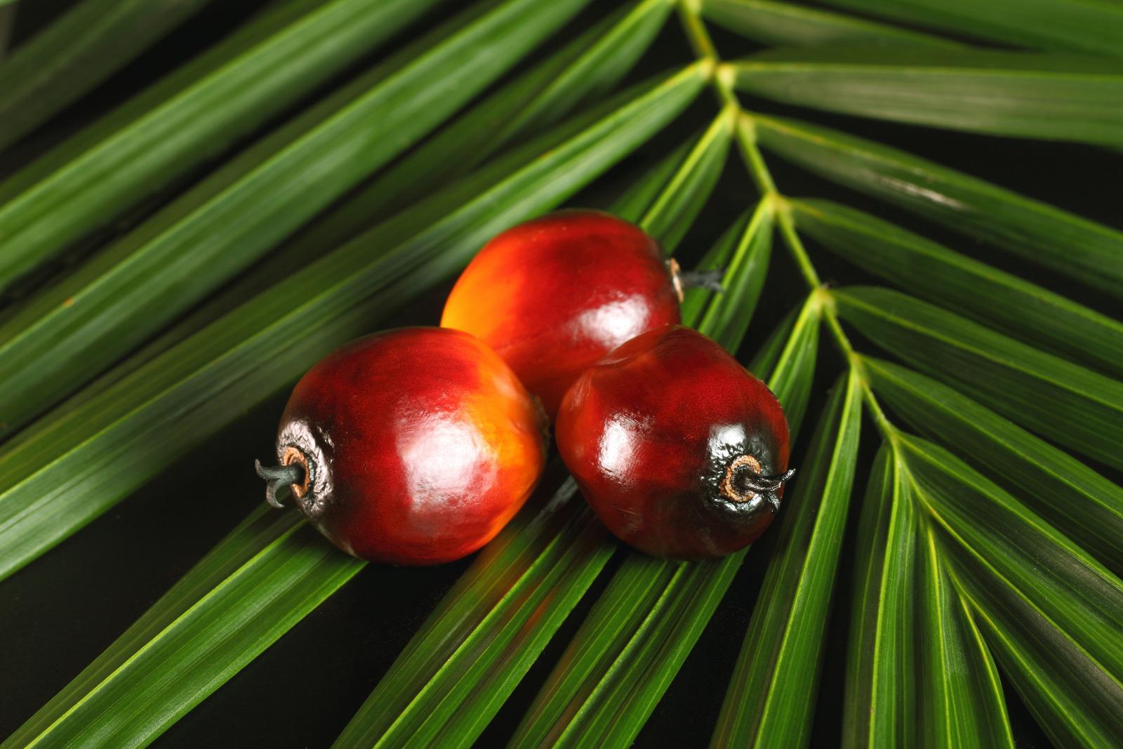 Брянский сенатор предложил активнее следить за пальмовым маслом