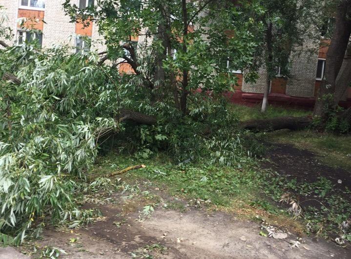 В Брянске на улице Володарского рухнуло дерево