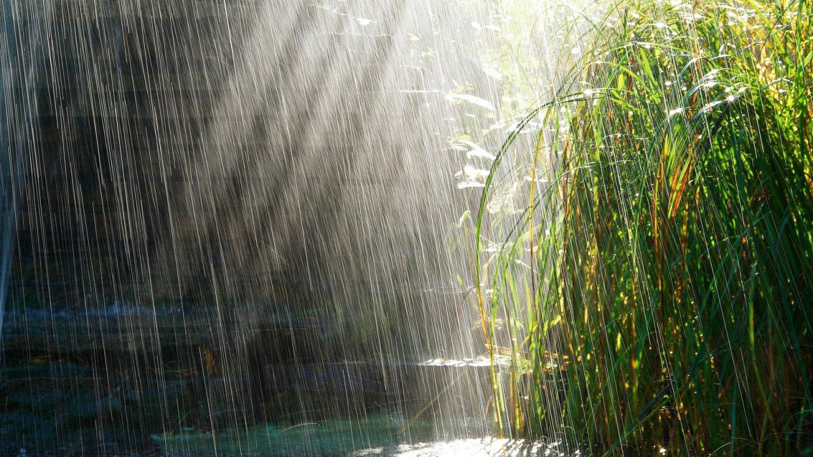 Завтра в Брянске ожидается дождь