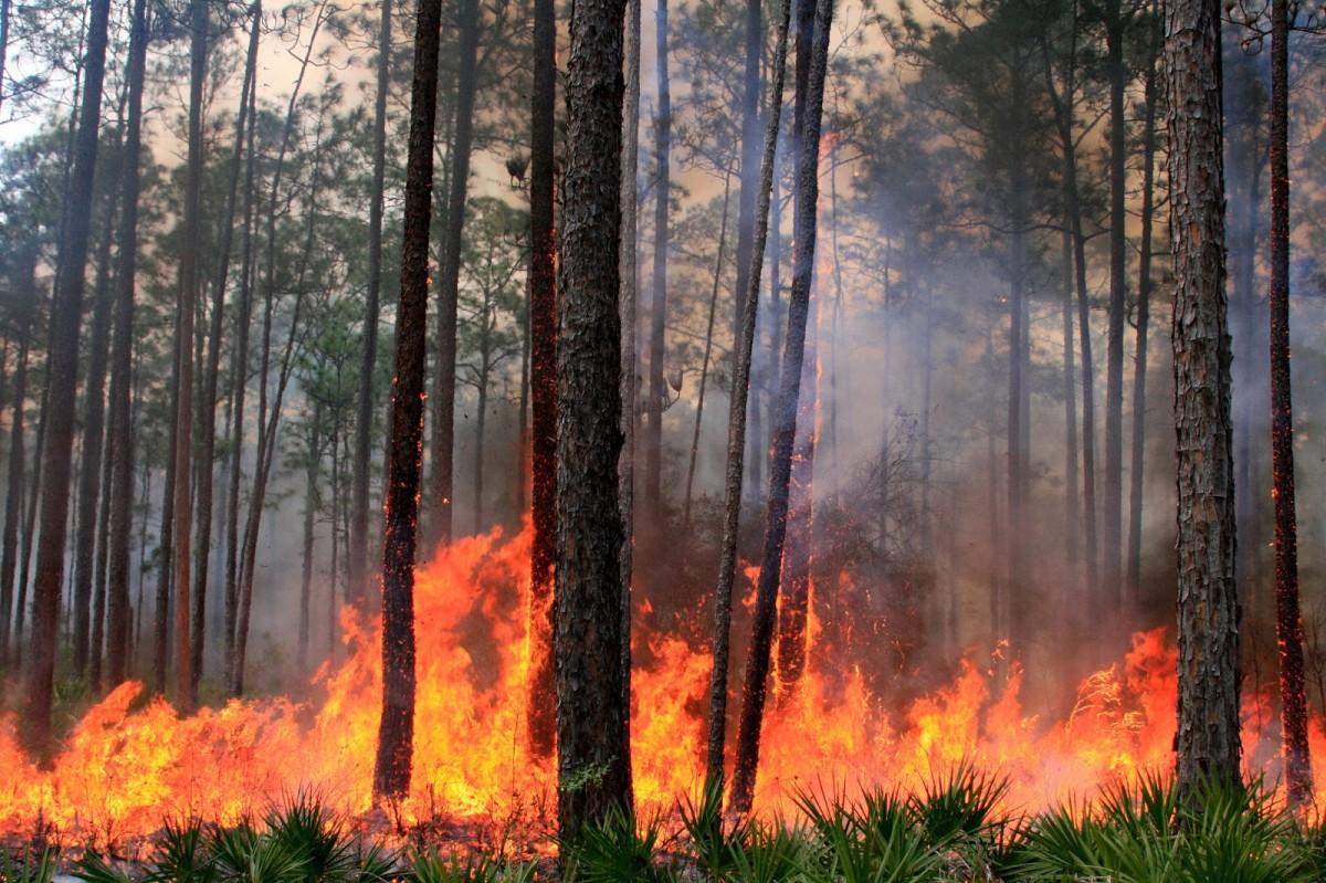 В Брянском районе полыхал лес