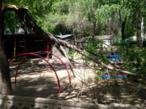 Дерево рухнуло в детском саду