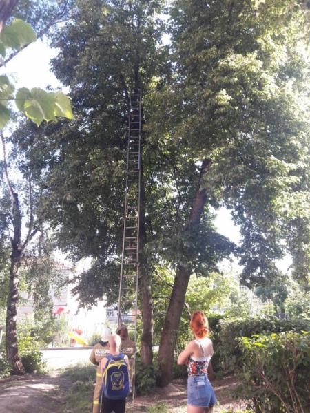 Брянские спасатели сняли ребенка с дерева