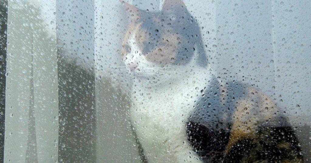Неделя в Брянске начнется с +30ºC, снова возможен дождь