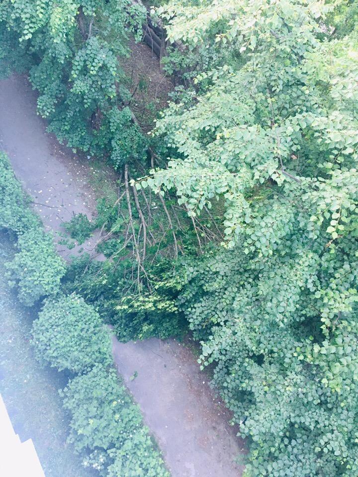 На Горбатова в Брянске рухнуло дерево