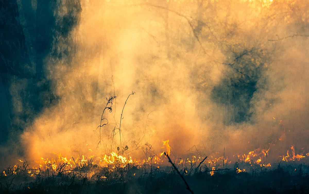 ВБрянском районе потушили лесной пожар