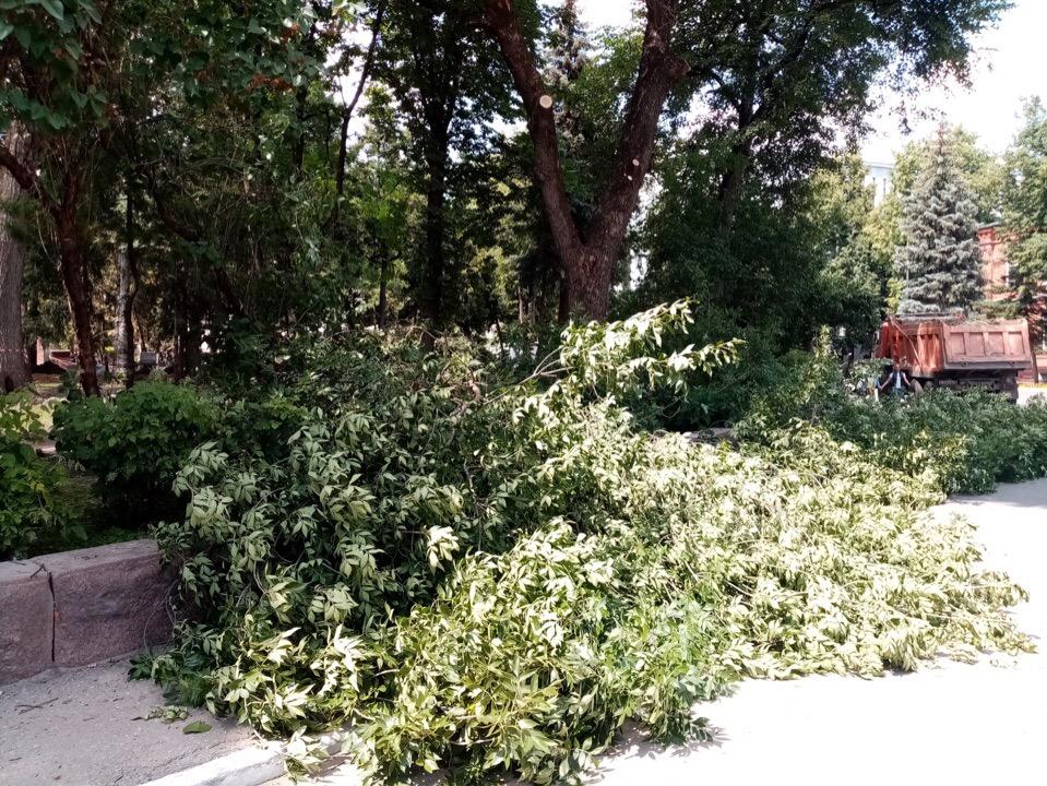В Брянске начали спиливать деревья в Круглом сквере
