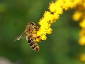 Почему пчелы стали гибнуть массово именно в 2019 году?