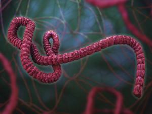 Вспышка вируса Эбола признана чрезвычайной ситуацией международного масштаба